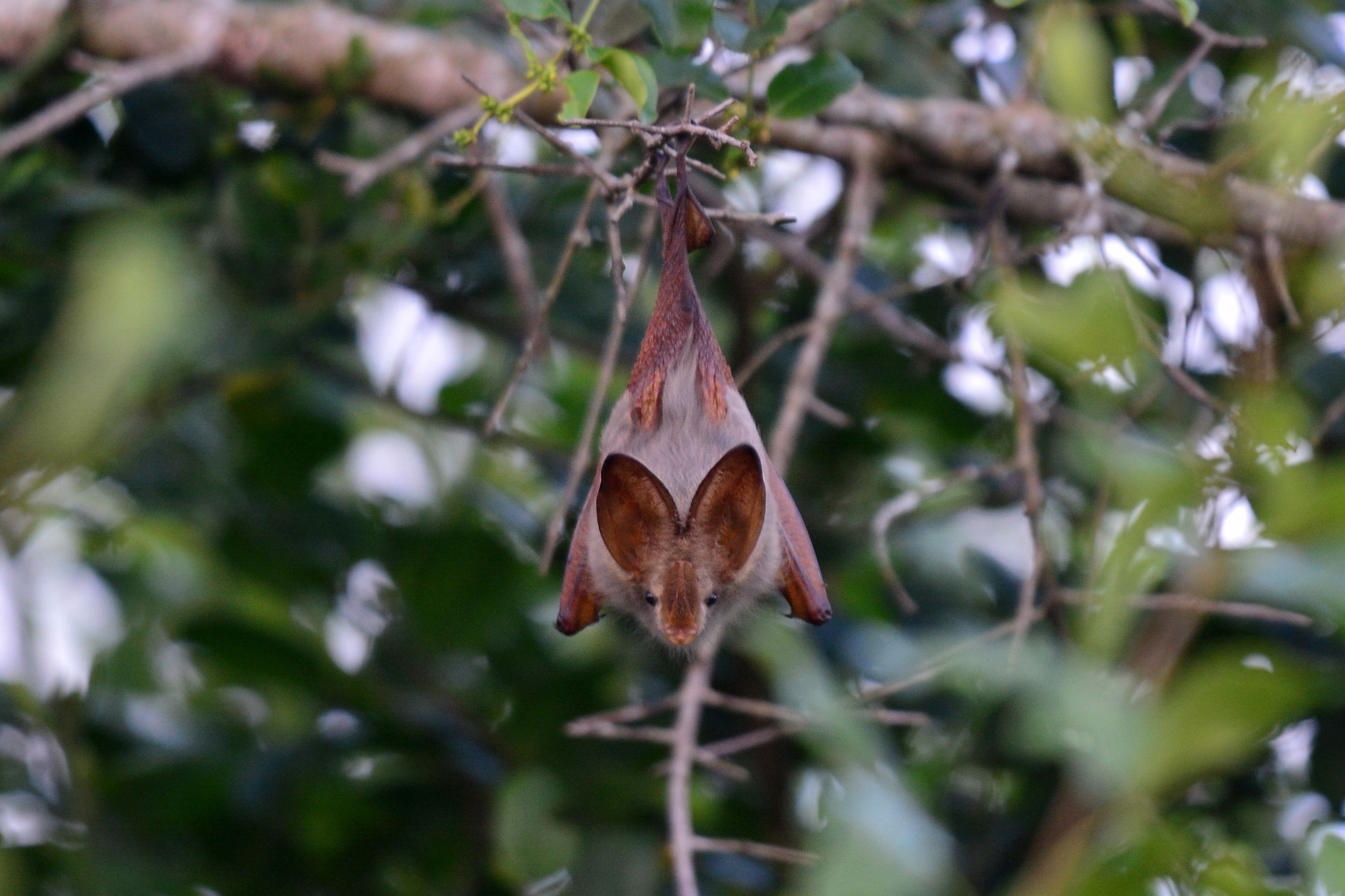 Bats are mammals, too.