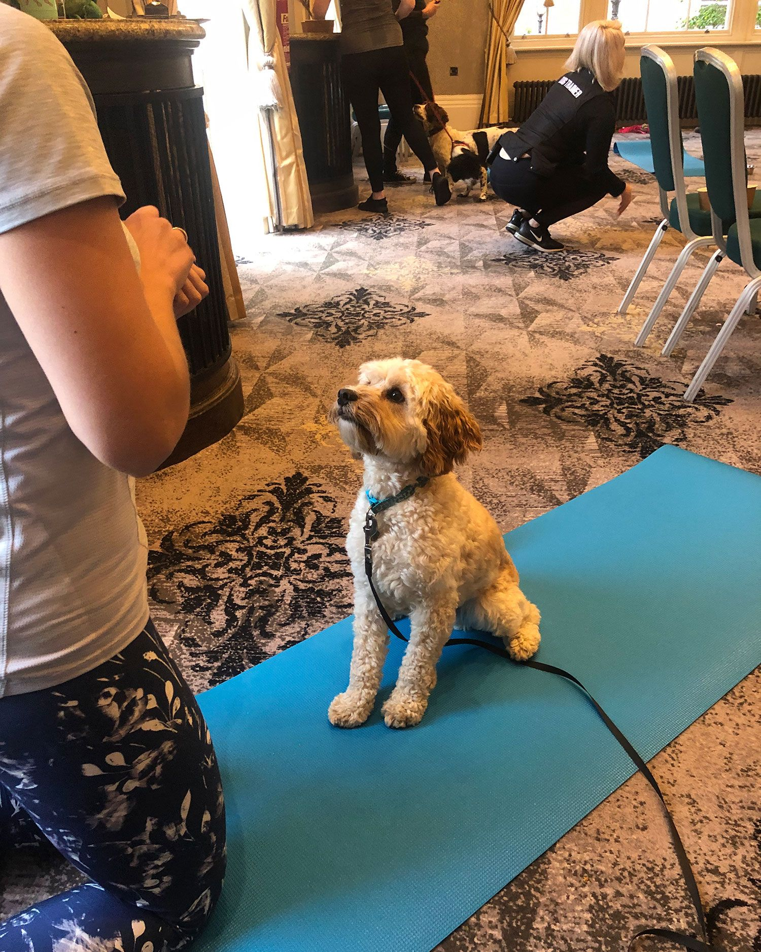 What is dog yoga? We went to a dog yoga class to see what it's all about