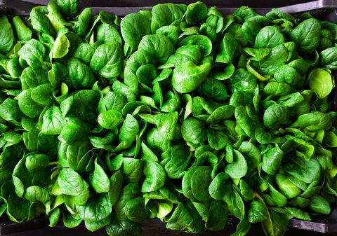 what to grown in november young baby spinach leaves in a box