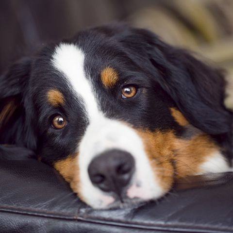 How To Help A Dog Who Is Grieving