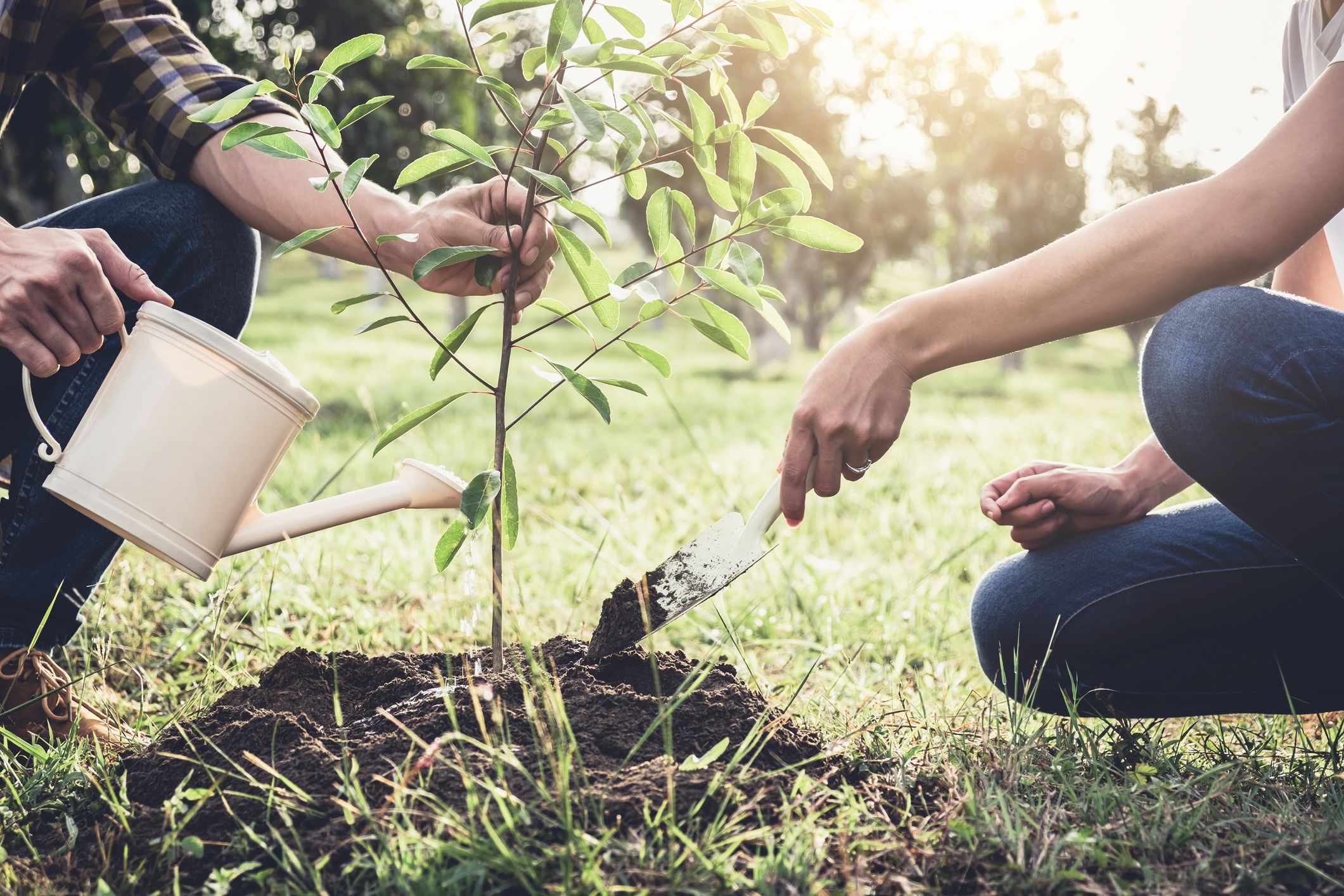 London College of Garden Design donates 50 trees to the NHS Forest initiative