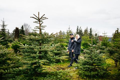 Young Couple Searching For Perfect Christmas Tree In Pine Forest