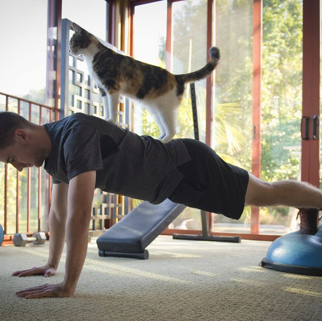 8 Fitness-Loving Felines That Will Inspire You to Crush Your Next Workout