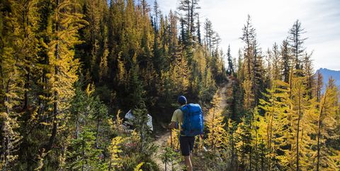 A young man hikes through the colorful larch trees in the Pasayten Wilderness on the Pacific Crest Trail (PCT) in Washington.