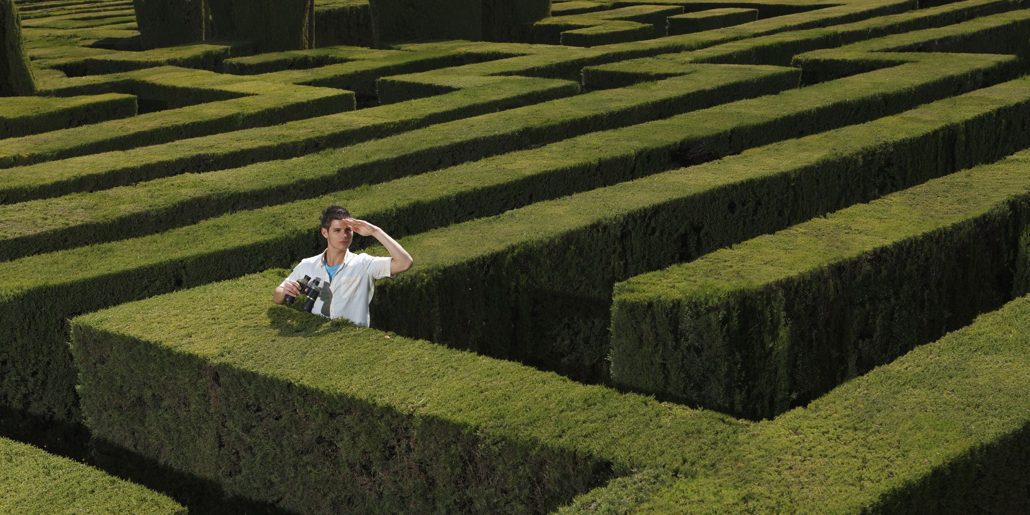 Young man lost in hedge maze