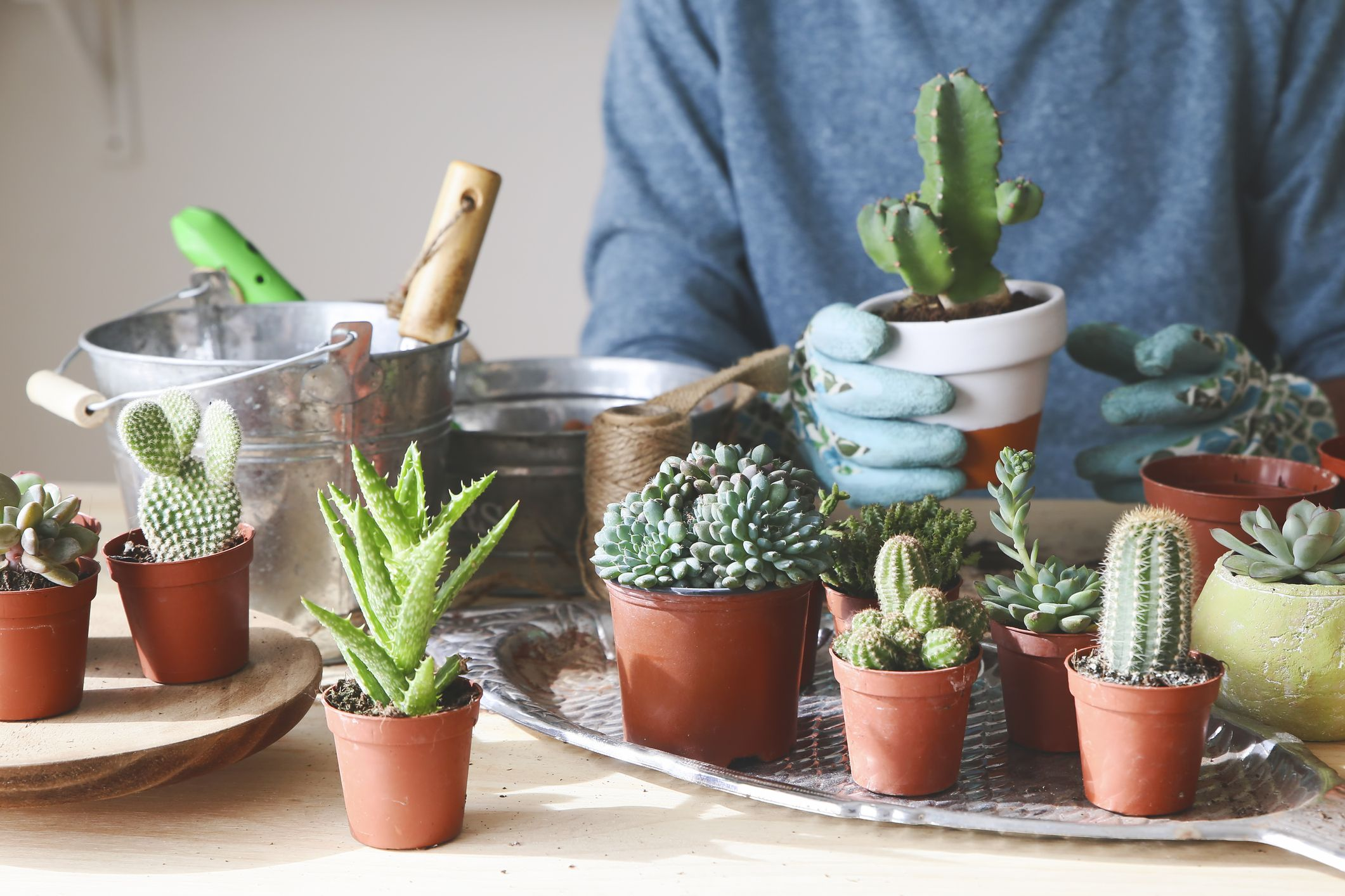 8 things you may not know about cactus plants