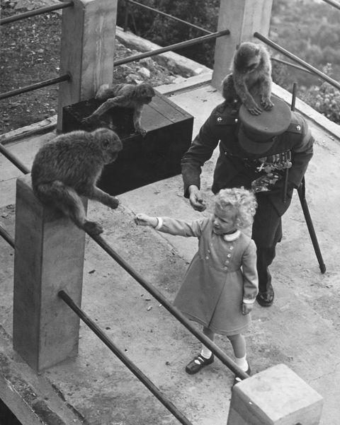princess anne barbary apes