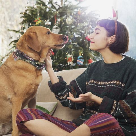 Young woman cuddles dog, sitting on sofa in front of the Christmas tree.