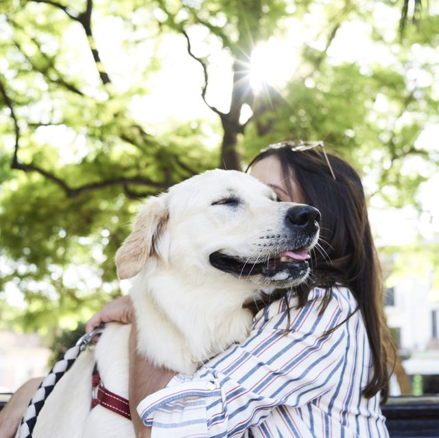 5 common pet owner habits that make dogs uncomfortable