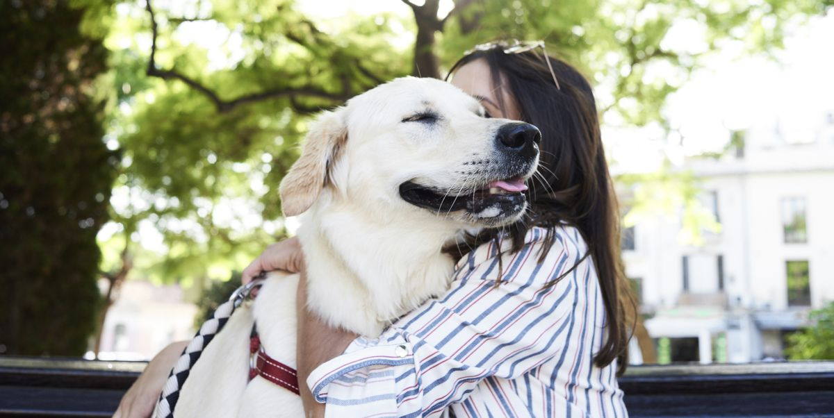 5 common pet owner habits that can make dogs uncomfortable