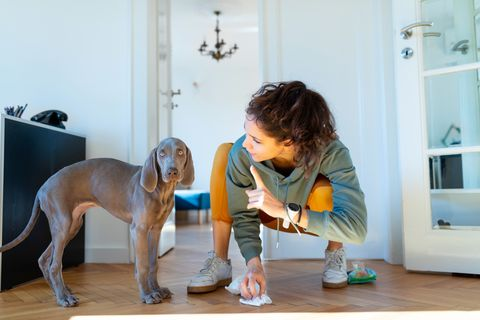 young woman wagging finger at her weimar puppy for peeing on the floor