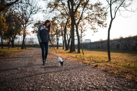 young woman walking with jack russell terrier in public park at sunset