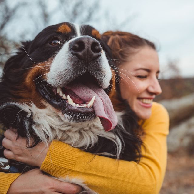 dogs are our oldest and closest companions, new dna has confirmed