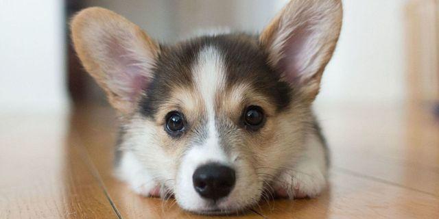 愛犬可愛い,犬 人を見分ける,