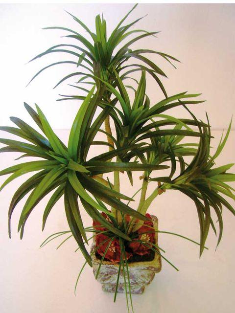 Plant, Flower, Terrestrial plant, Houseplant, Botany, Flowerpot, Flowering plant, Tree, Arecales, Plant stem,