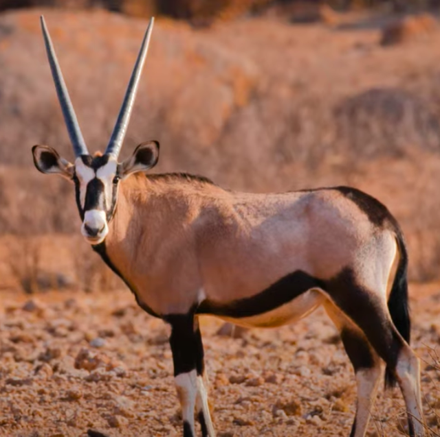 wildlife at sonop hotel in namibia