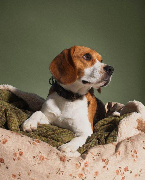 nueva colección de zara home para perros