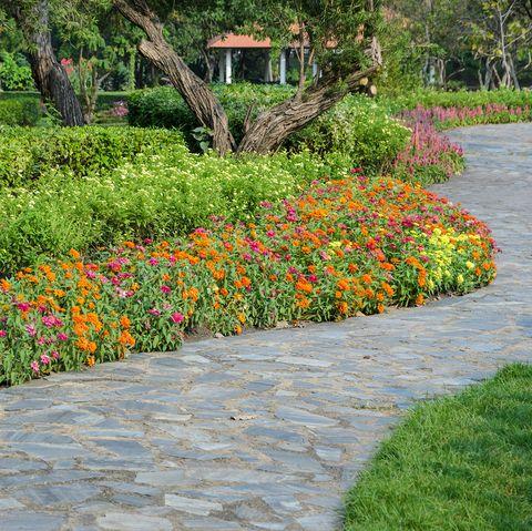 10 Best Edging Plants Plants For Walkway Borders