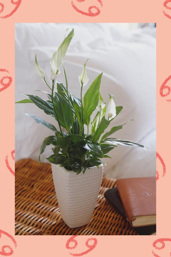 Best Houseplant For Your Zodiac Sign Houseplants Based