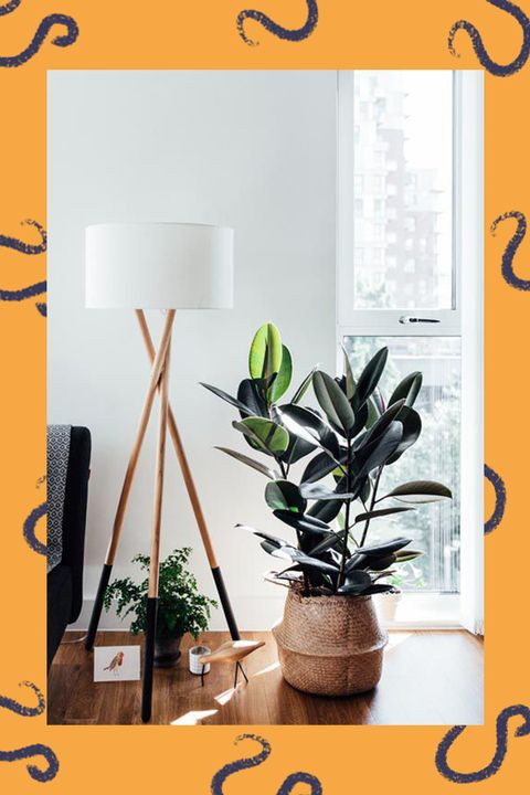 Best Houseplant for Your Zodiac Sign - Houseplants Based on ... on