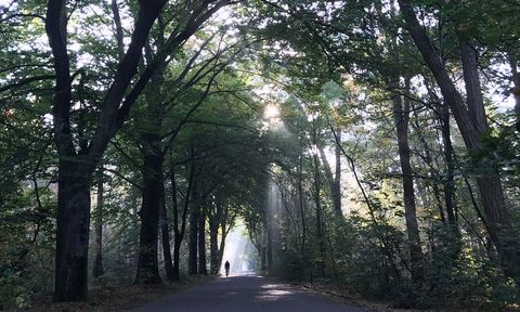 Tree, Nature, Forest, Woodland, Natural environment, Natural landscape, Atmospheric phenomenon, Nature reserve, Woody plant, Sunlight,