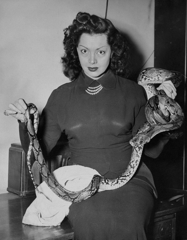 united states   february 04  night club snake dancer vera zorita katherine boyd petillo, with her 10 foot python, elmer  photo by evelyn strausny daily news archive via getty images