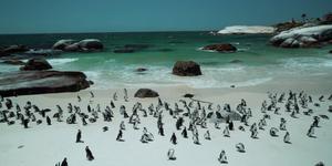 zuid-afrika, zuid-afrika vakantie, pinguins,