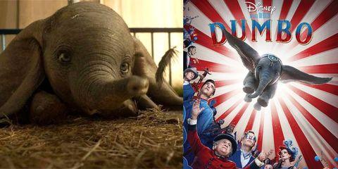 Elephant, Elephants and Mammoths, Terrestrial animal, Organism, Photography, Wildlife, Marine mammal,