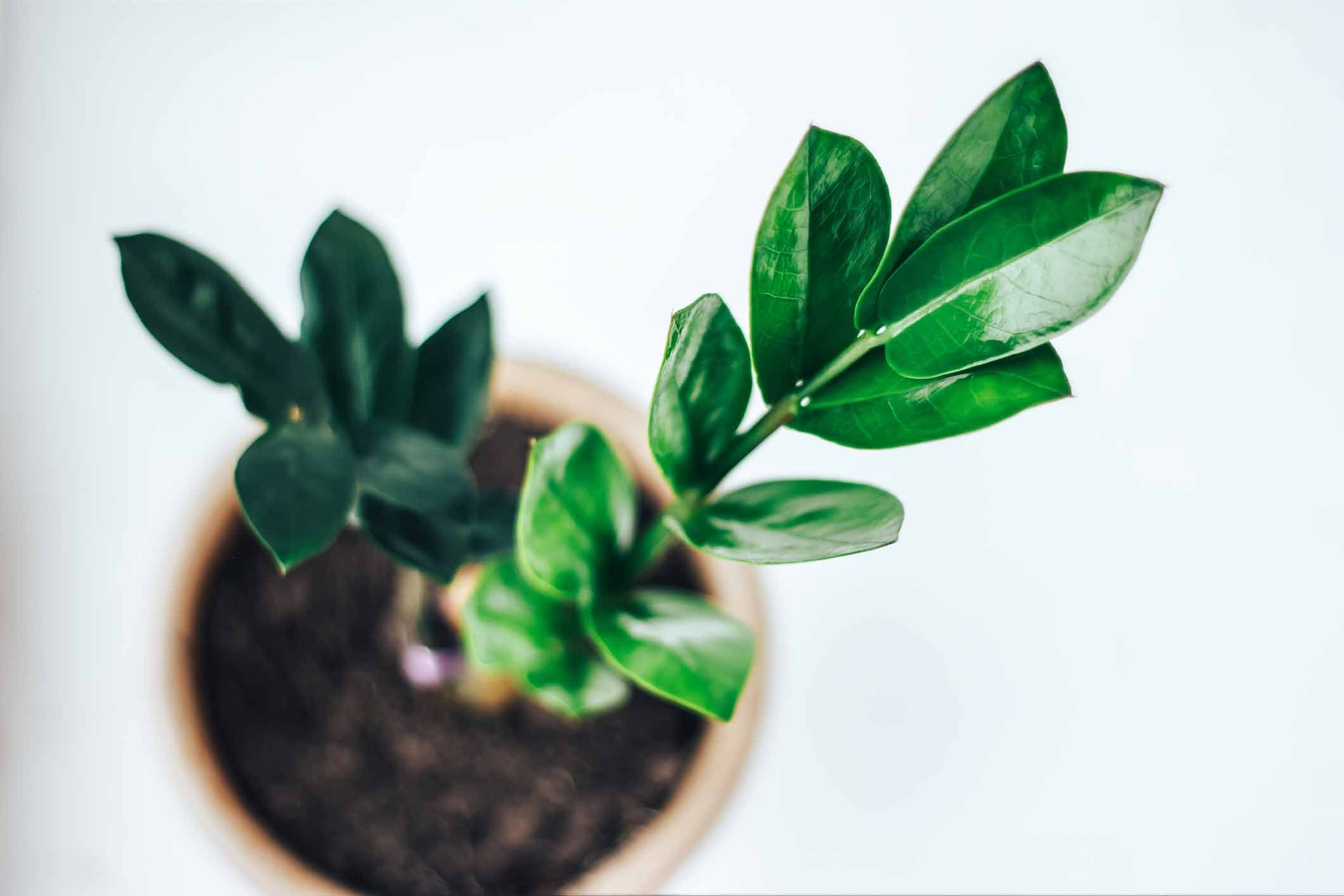 Planten In Woonkamer : Exotische planten in het interieur makeover