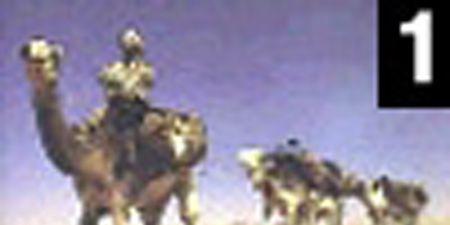 Nature, Brown, People, Yellow, Natural environment, Camel, Organism, Vertebrate, Landscape, Photograph,