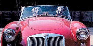 Motor vehicle, Mode of transport, Automotive design, Vehicle, Hood, Transport, Classic car, Car, Automotive exterior, Automotive lighting,