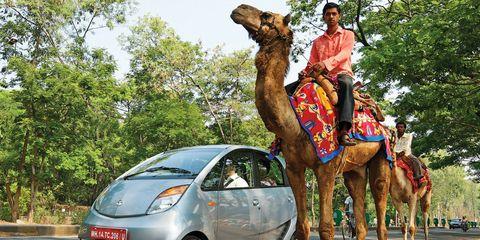 Motor vehicle, Camel, Wheel, Mode of transport, Automotive design, Vertebrate, Transport, Camelid, Landscape, Car,