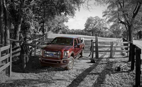 Wheel, Wood, Vehicle, Pickup truck, Tree, Automotive exterior, Fender, Automotive tire, Woody plant, Auto part,