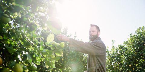 People in nature, Sunlight, Beard, Fruit tree, Agriculture, Plantation, Vineyard, Vitis, Grapevine family, Rejoicing,