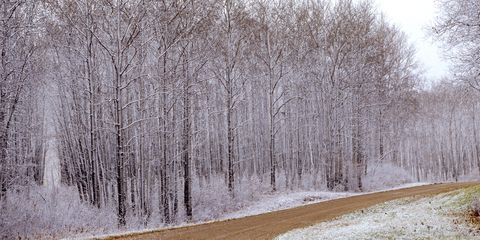 Winter, Branch, Natural landscape, Freezing, Twig, Snow, Forest, Trunk, Grove, Thoroughfare,