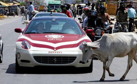 Motor vehicle, Mode of transport, Automotive design, Land vehicle, Vehicle, Bovine, Grille, Car, Performance car, Ox,