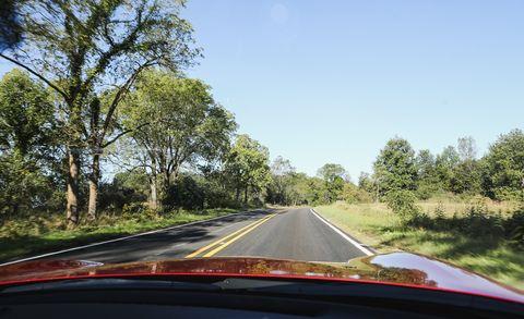 Nature, Road, Vegetation, Natural environment, Branch, Infrastructure, Natural landscape, Plant community, Road surface, Leaf,
