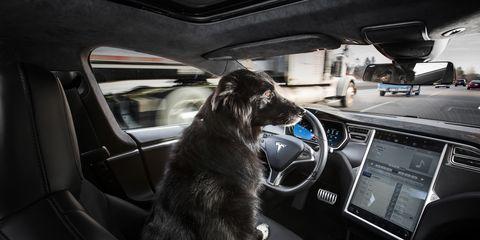 Motor vehicle, Automotive mirror, Glass, Steering part, Carnivore, Vertebrate, Vehicle door, Car, Dog, Steering wheel,