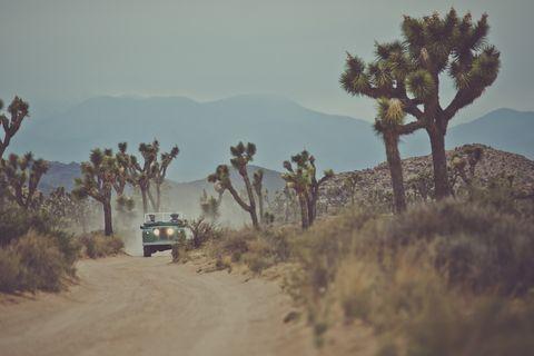Road, Plant community, Landscape, Dirt road, Ecoregion, Travel, Shrubland, Sand, Savanna, Off-roading,