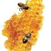 honey substitute sugar