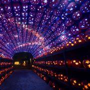 Blue, Lighting, Light, Purple, Christmas lights, Infrastructure, Sky, Night, Electric blue, Architecture,