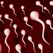 sperm.jpg