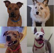 adopting a dog via zoom