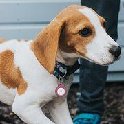 airtag key ring on dog collar