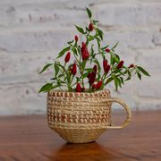 basekt with plant