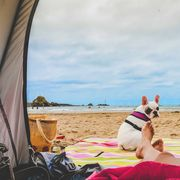 person lounging in beach tent with dog