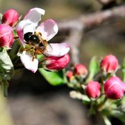 FRANCE-AGRICULTURE-HORTICULTURE-ENVIRONMENT-ANIMAL-INNOVATION-BE