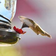 best-hummingbird-feeders