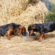 dog food recall october 2020