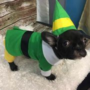 Dog, Dog clothes, Canidae, French bulldog, Pug, Green, Dog breed, Snout, Boston terrier, Puppy,